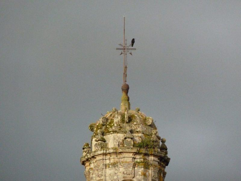 cuervoveleta